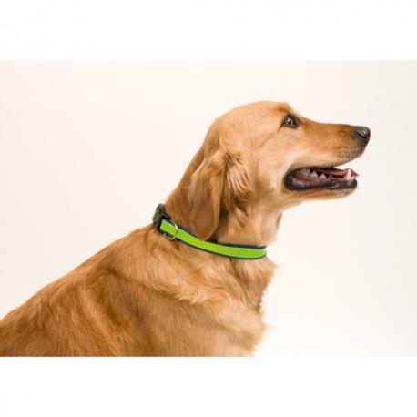 Collar Muttley