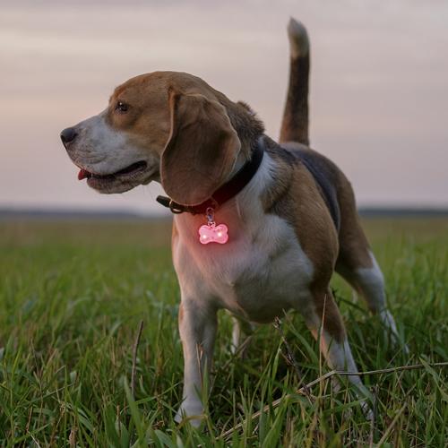 Llavero mascotas luz reflectante Savera